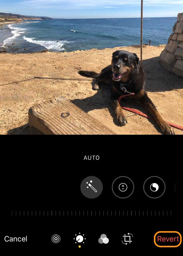 revert photo app changes to Live Photo