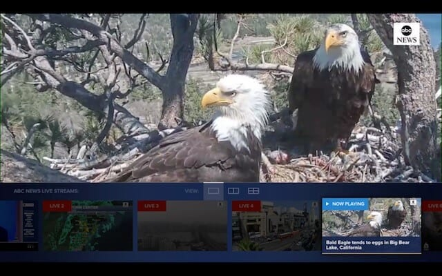 Live feed eagle's nest Apple TV