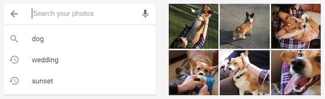 Google Photos search sample