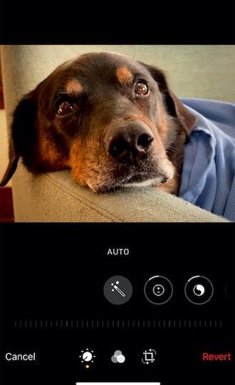 Auto-adjust photos in iPhone 11