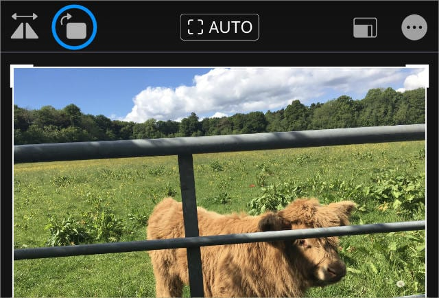 Rotate button in Photos app on iPhone
