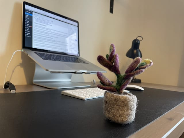 iPhone photo of plant on desk without Portrait mode