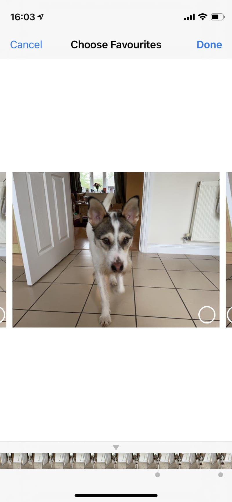 Selecting favorite burst photos on iPhone